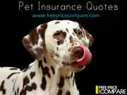 Cheapest Pet Insurance UK